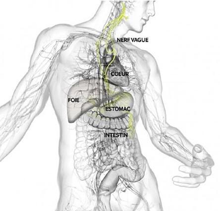 Approche biomécanique des troubles de l'intestin