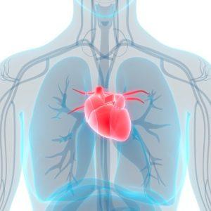 La coherence cardiaque